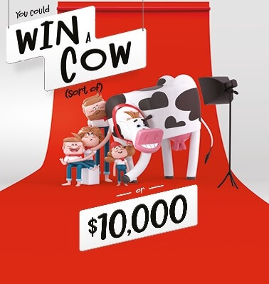 Win a cow contest